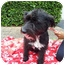 Photo 3 - Terrier (Unknown Type, Medium) Mix Dog for adoption in Coral Springs, Florida - Sally