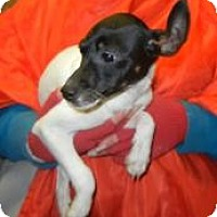 Adopt A Pet :: Bene ADOPTED!! - Antioch, IL