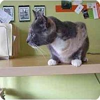 Adopt A Pet :: Grace - Philadelphia, PA
