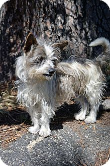 Terrier (Unknown Type, Small) Mix Dog for adoption in Mountain Center, California - Radar