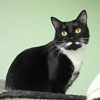 Adopt A Pet :: Bleemey - Yukon, OK