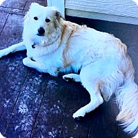 Adopt A Pet :: Chewy-ADOPTION PENDING - Boulder, CO