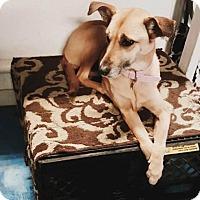 Adopt A Pet :: Diamond - Grafton, OH