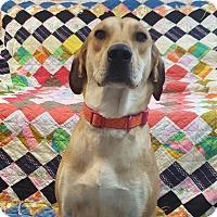 Adopt A Pet :: Columbia - Hawk Point, MO
