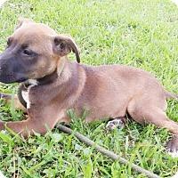 Adopt A Pet :: Allie - Southington, CT