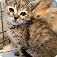 Adopt A Pet :: Luna - Jefferson, NC