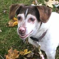 Adopt A Pet :: Ava - Fillmore, IN