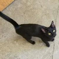 Adopt A Pet :: Baxter - Larned, KS