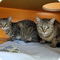 Adopt A Pet :: Emma & Ginger - Elyria, OH