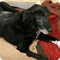 Adopt A Pet :: Buster - Franklin, NH