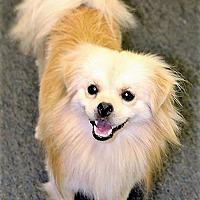 Adopt A Pet :: Bingo - Tavares, FL