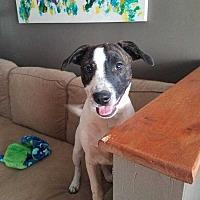 Adopt A Pet :: Sienna - Thompson, PA
