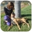 Photo 1 - Rhodesian Ridgeback/Boxer Mix Dog for adoption in El Cajon, California - Lucy