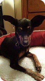 Miniature Pinscher Dog for adoption in Wilmington, Delaware - Penelope