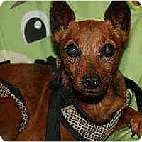 Adopt A Pet :: Mr BoJangles - Florissant, MO