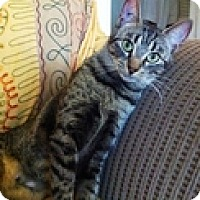 Adopt A Pet :: Meables - Vancouver, BC