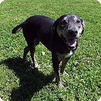 Adopt A Pet :: Daisy - Franklin, KY