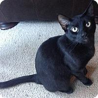 Adopt A Pet :: Eli - Denton, TX