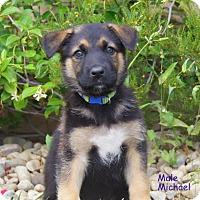 Adopt A Pet :: Michael von Rosie - Thousand Oaks, CA