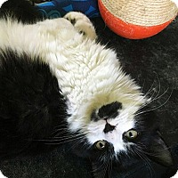 Adopt A Pet :: Katrina - N. Billerica, MA