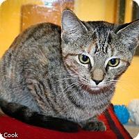 Adopt A Pet :: Yahtzee - Ann Arbor, MI