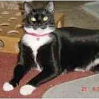 Adopt A Pet :: Sasha - Pasadena, CA