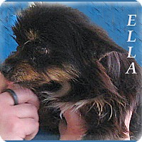 Adopt A Pet :: Ella- Real Charmer! - Marlborough, MA