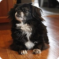 Adopt A Pet :: Princess - Toronto, ON