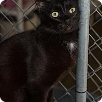 Adopt A Pet :: Benny - Fallbrook, CA