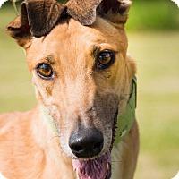 Adopt A Pet :: Kay Tuck Truely (Trudy) - Carol Stream, IL