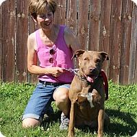 Adopt A Pet :: Rogue - Elyria, OH