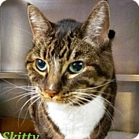 Adopt A Pet :: Skitty - El Cajon, CA