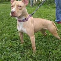 Adopt A Pet :: Izzy - Cooperstown, NY