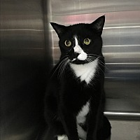 Adopt A Pet :: Madison - Warwick, RI