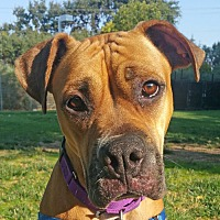 Adopt A Pet :: Dora - Walnut Creek, CA