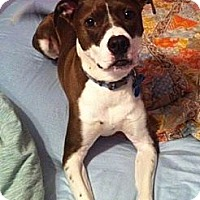 Adopt A Pet :: Leo (nee Desi) - Marietta, GA
