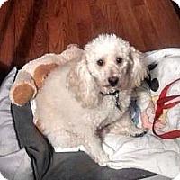 Adopt A Pet :: Toby - McKeesport, PA