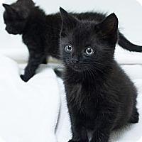 Adopt A Pet :: Ariel & Aurora - Chicago, IL