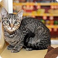 Adopt A Pet :: Simon - Farmingdale, NY