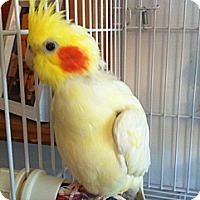 Adopt A Pet :: Ira - Lenexa, KS