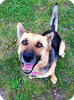 German Shepherd Dog Mix Dog for adoption in Charlotte, North Carolina - Teka