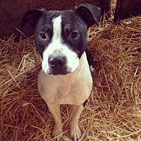 Adopt A Pet :: Flash - Lodi, CA