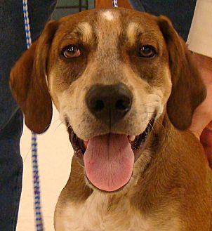 Hound (Unknown Type) Mix Dog for adoption in Rosalia, Kansas - Copper