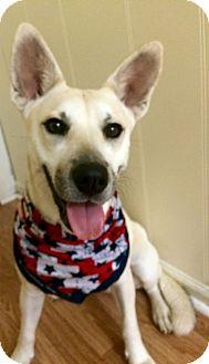 German Shepherd Dog/Labrador Retriever Mix Dog for adoption in Sumter, South Carolina - Tulip