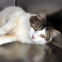 Adopt A Pet :: Mona - Port Clinton, OH