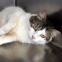 Adopt A Pet :: Mona - Port Clinton, OH