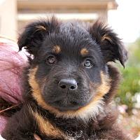 Adopt A Pet :: Kringle von Wuste - Thousand Oaks, CA