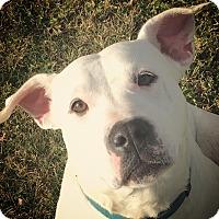 Adopt A Pet :: Zena - Fergus Falls, MN