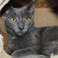 Adopt A Pet :: Henry - Westville, IN