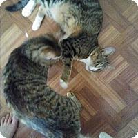 Adopt A Pet :: Urgent bonded Pair - Mixes - wayne, MI